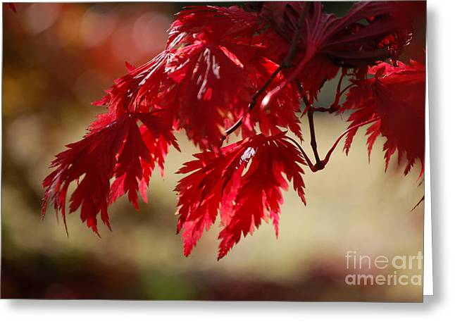 Red Rhapsody By Jammer Greeting Card