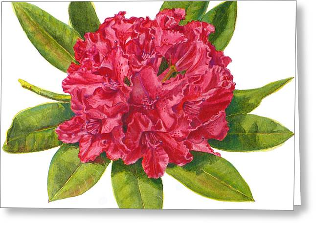 Red Rhododendron  Greeting Card by Janet  Zeh
