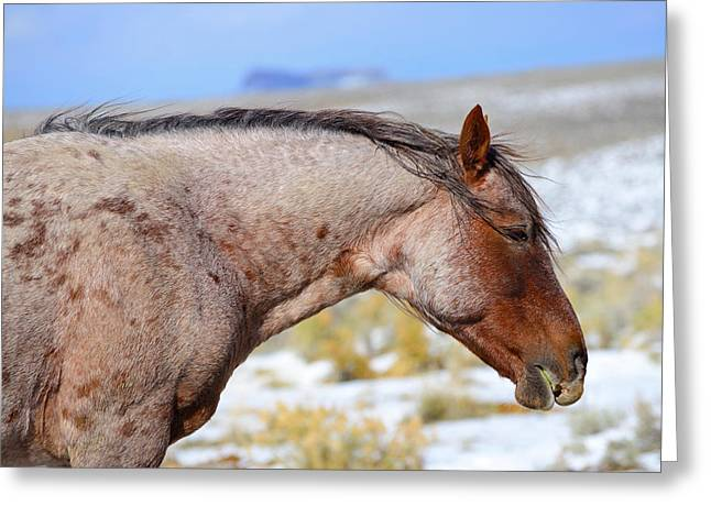 Red Roan Greeting Card by Eric Nielsen