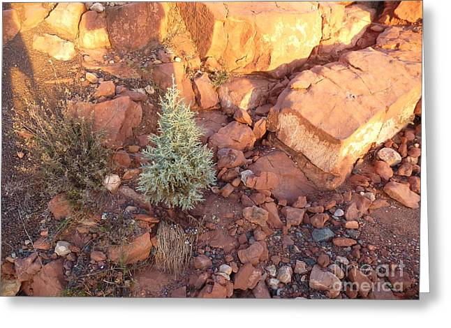 Red Rock Christmas Greeting Card by Marlene Rose Besso