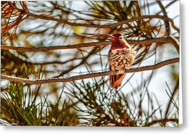 Red Rock Country Hummingbird Greeting Card by Bob and Nadine Johnston
