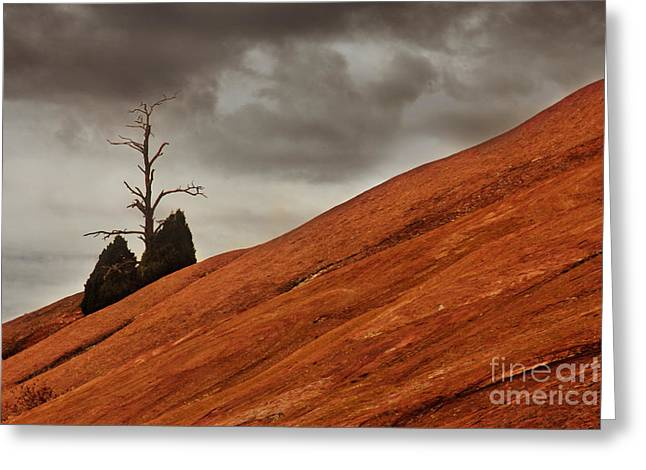 Greeting Card featuring the photograph Red Rock by Dana DiPasquale