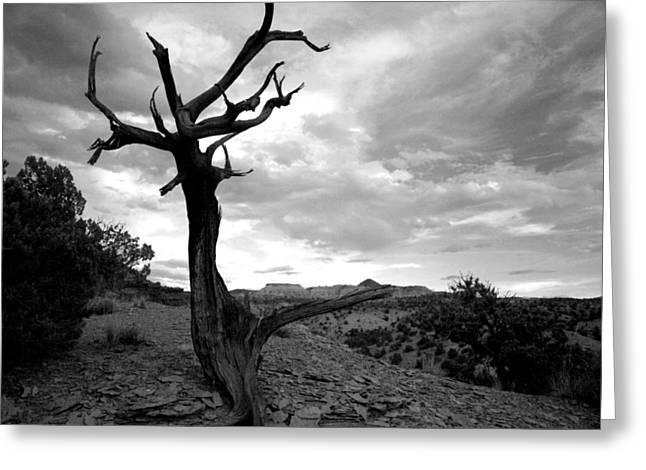 Red Rocks Dead Tree Greeting Card