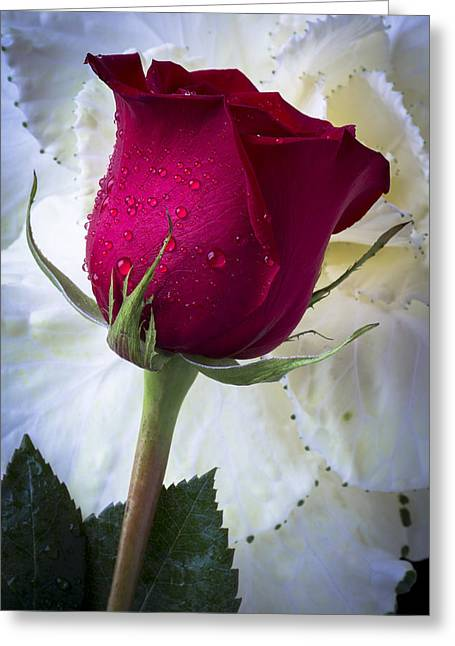 Red Rose And Kale Flower Greeting Card by Garry Gay