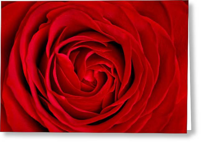 Red Rose Greeting Card by Aqnus Febriyant