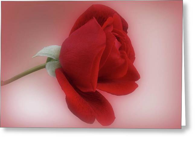Red Rose For You Greeting Card by Sandy Keeton