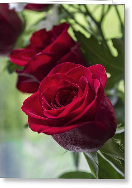 Red Rose Greeting Card by Ian Mitchell