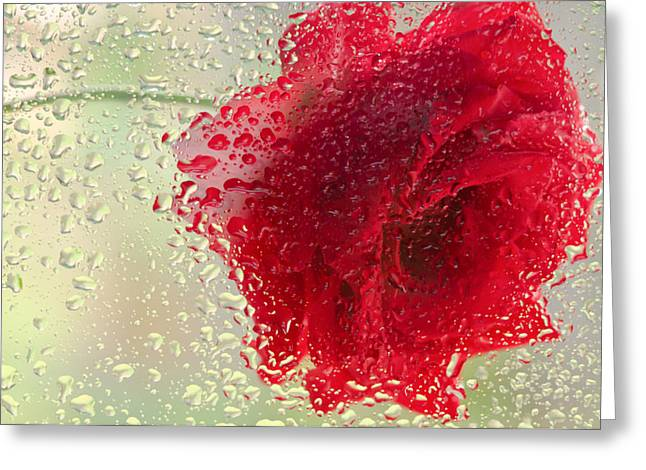 Red Rose In The Rain Greeting Card by Don Schwartz