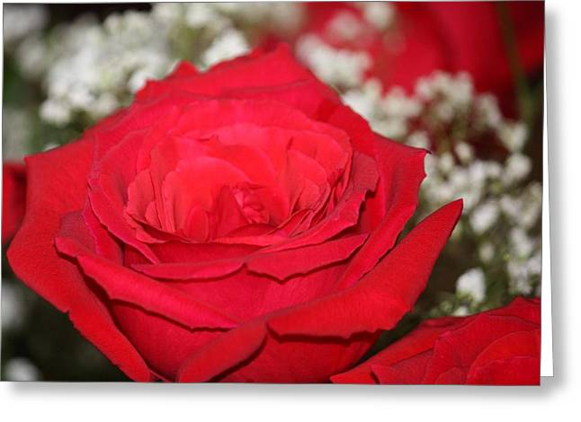 Red Rose Greeting Card by Kimber  Butler