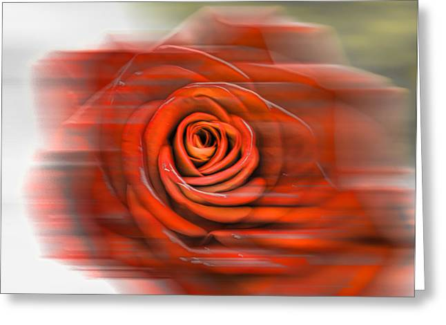 Greeting Card featuring the photograph Red Rose by Leif Sohlman