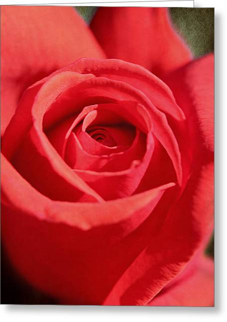Red Rose Greeting Card by Lorella  Schoales