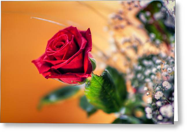 Red Rose Of Love Greeting Card