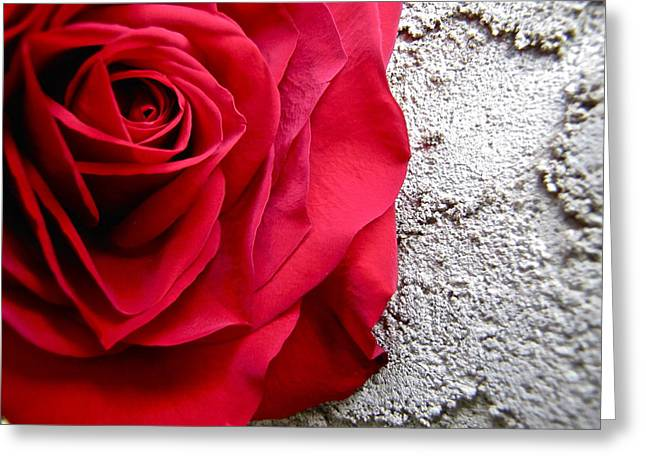 Red Rose On Wall Greeting Card