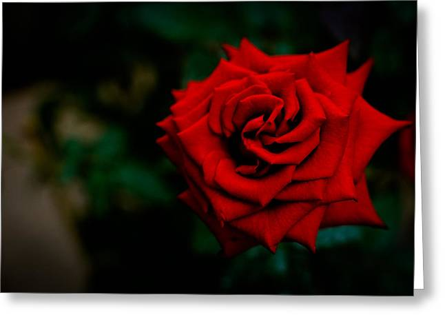 Red Rose Singapore Flower Greeting Card by Donald Chen