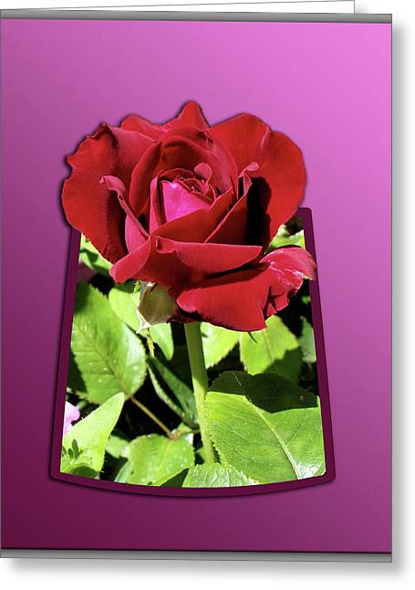 Red Rose Greeting Card by Thomas Woolworth