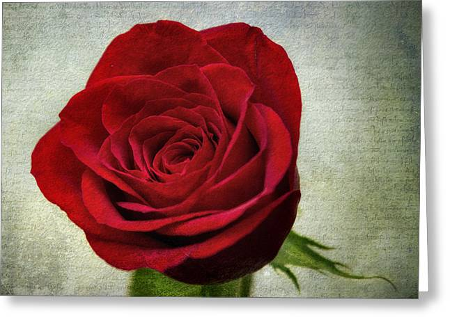 Red Rose V2 Greeting Card by Ian Mitchell