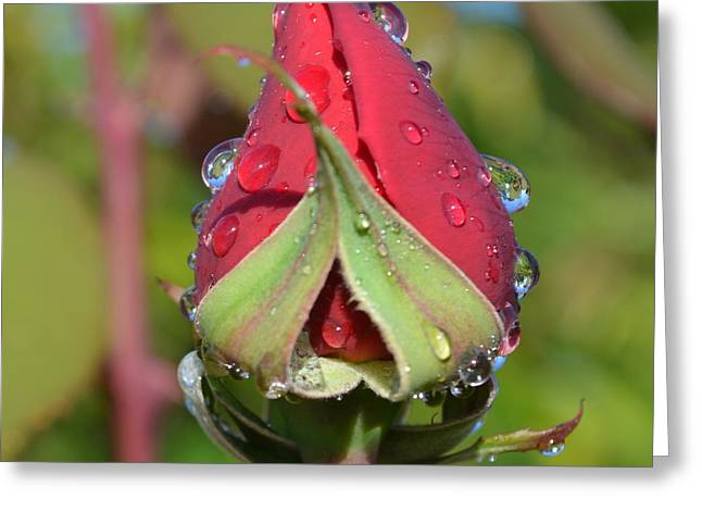 Red Rose With Dew 1.3 Greeting Card