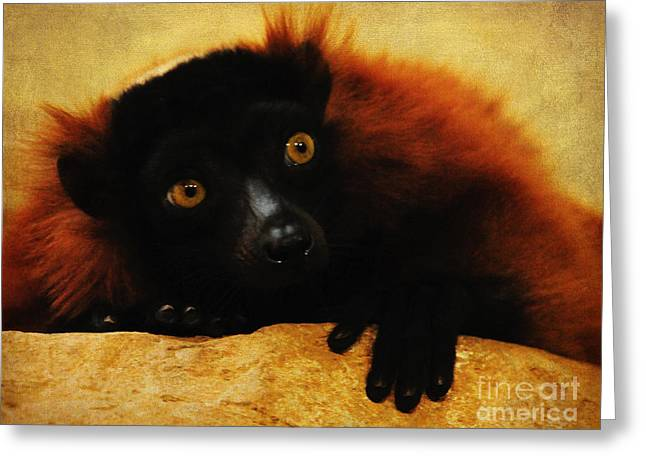 Red Ruffed Lemur Greeting Card by Olivia Hardwicke