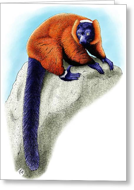 Red Ruffed Lemur Greeting Card by Roger Hall