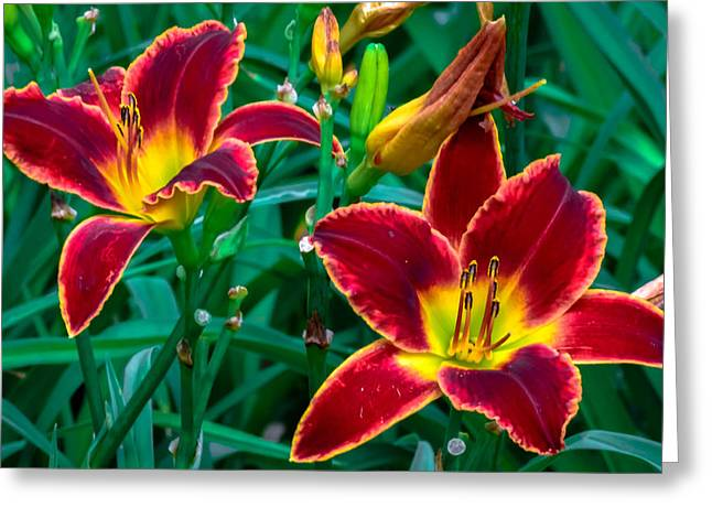 Red Rum Daylilies Greeting Card