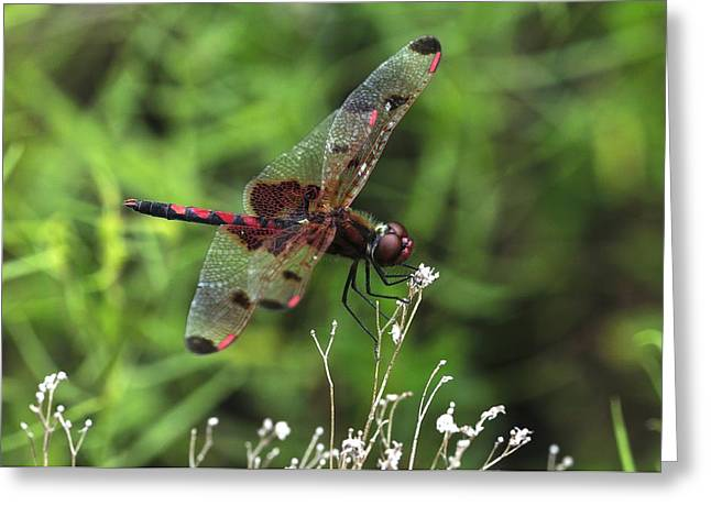 Red Saddlebags Greeting Card