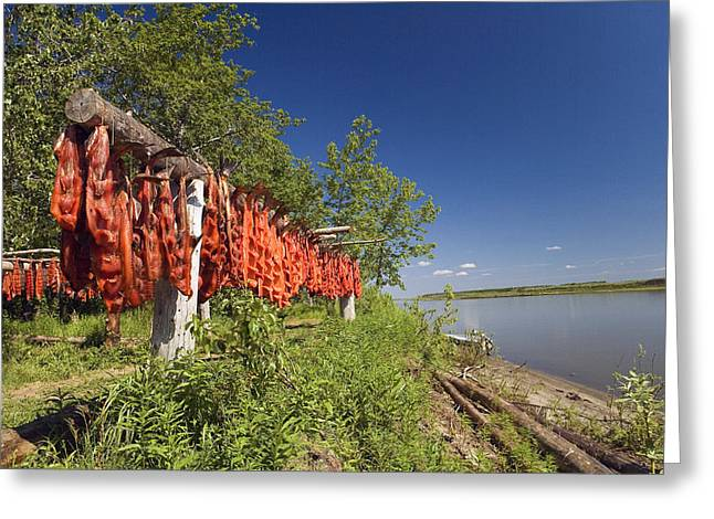 Red Salmon Hang On Drying Rack Along Greeting Card by Kevin Smith