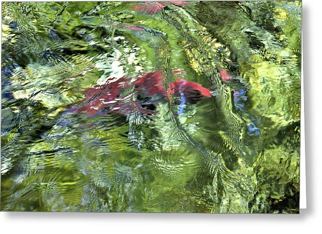 Greeting Card featuring the photograph Red Salmon In Steep Creek by Cathy Mahnke