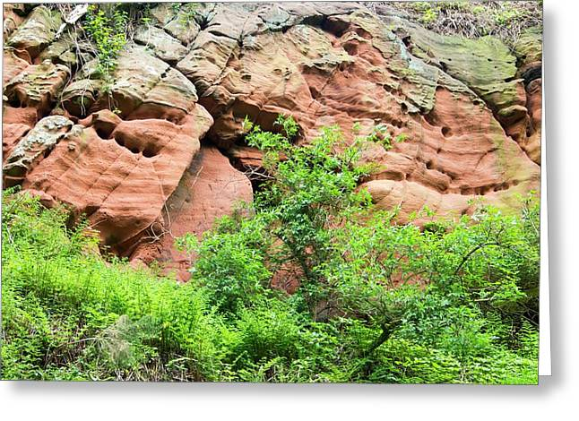 Red Sandstone Bluffs On The River Eden Greeting Card by Ashley Cooper