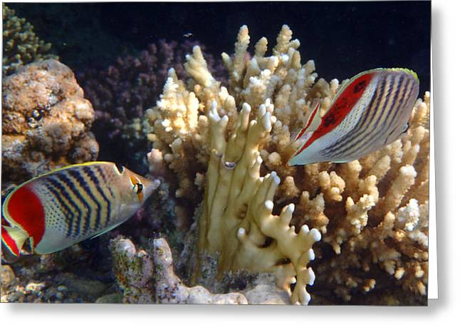 Red Sea Beauty 2 Greeting Card