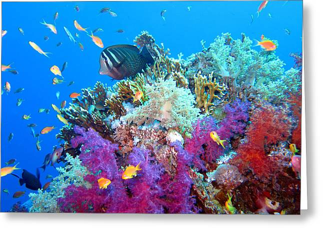 Red Sea Colours Greeting Card by Laura Hiesinger