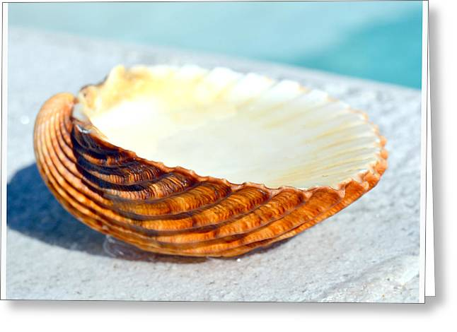 Red Sea Shell With Deep Pattern Greeting Card by Tommytechno Sweden