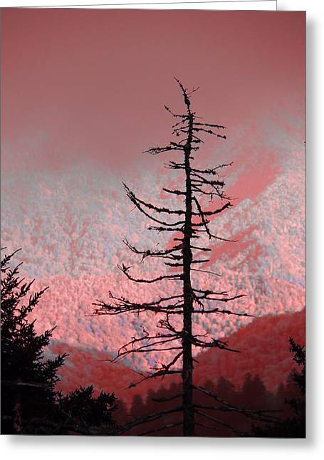 Red Shadows On The Smokies Greeting Card by Dan Sproul