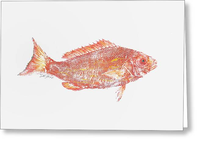 Red Snapper Against White Background Greeting Card