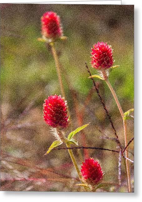 Red Spiky Flowers Greeting Card by Karen Stephenson