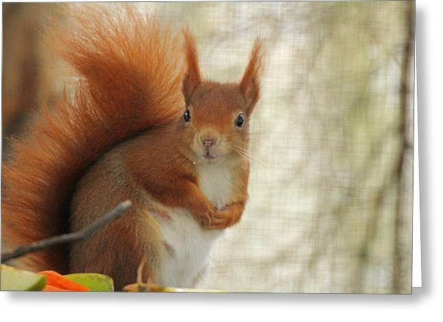 Red Squirrel Greeting Card by Martyn Bennett