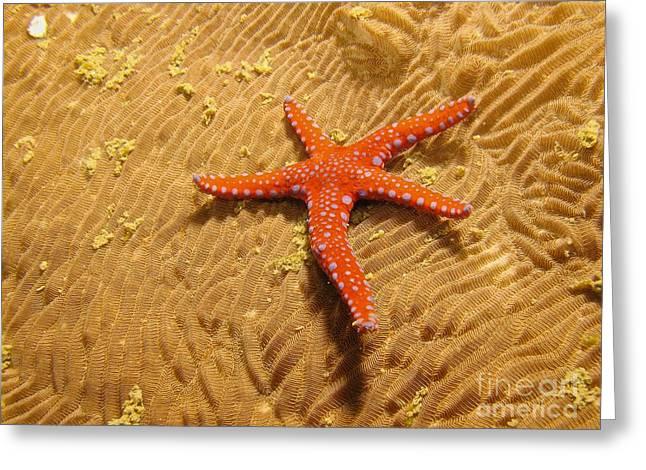 Red Star  Greeting Card by Gary Bridger