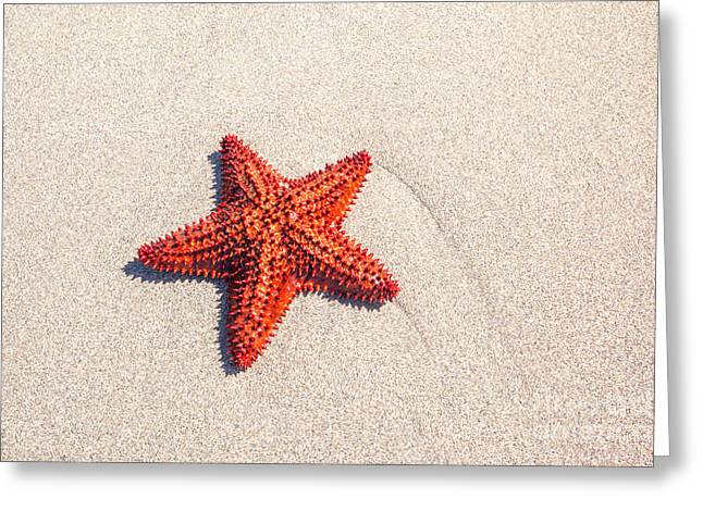 Red Starfish On Sand Greeting Card by Matteo Colombo