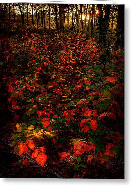 Red Sumac Greeting Card
