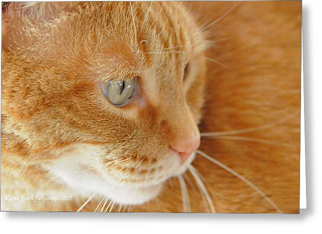 Red Tabby Cat Greeting Card by Renee Forth-Fukumoto
