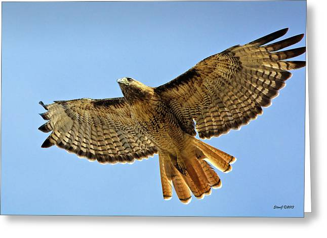 Red Tail Hawk Circling Above Greeting Card by Stephen  Johnson