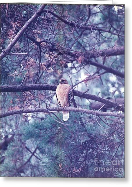 Greeting Card featuring the photograph Red Tail Hawk by Cynthia Marcopulos