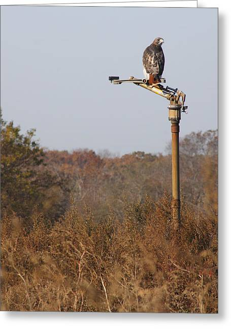 Red Tail Hawk New York Greeting Card