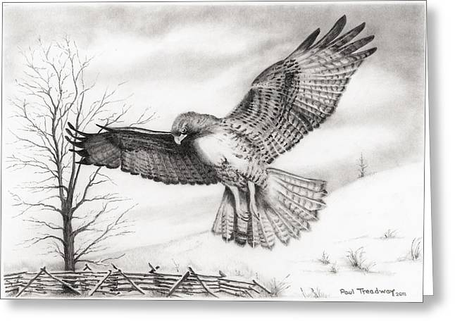 Red Tail Hawk Greeting Card by Paul Treadway