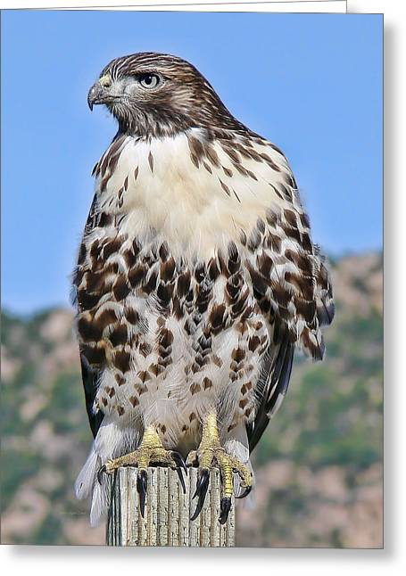 Red Tail Hawk Youth Greeting Card by Jennie Marie Schell
