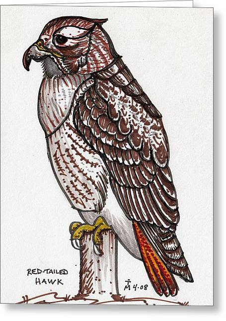 Red Tailed Hawk Greeting Card by Artreats By Tim