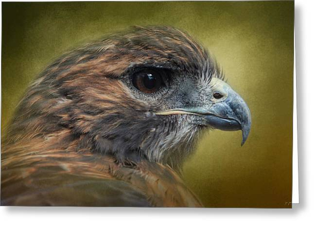 Red Tailed Hawk At Reelfoot Greeting Card by Jai Johnson