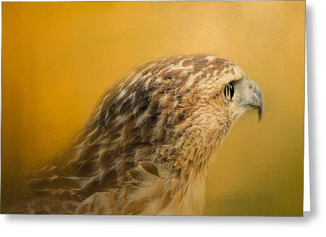 Red Tailed Hawk At Sunset Greeting Card by Jai Johnson