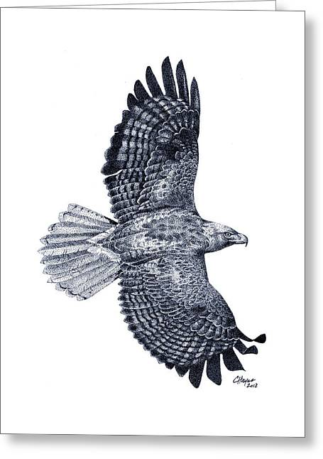 Red Tailed Hawk Greeting Card by Colin Hayes