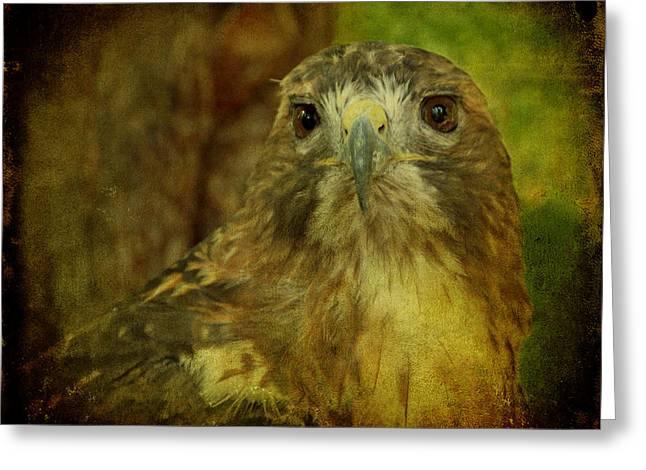 Red-tailed Hawk II Greeting Card by Sandy Keeton