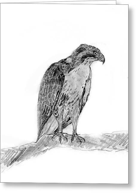 Red Tailed Hawk Greeting Card by KG Christopher
